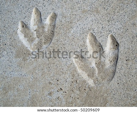 couple of year old Dinosaur tracks in cement discovered at a park playground area.