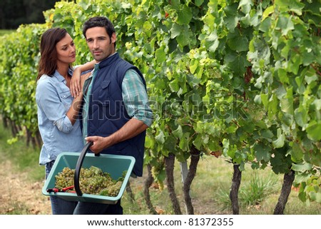 Couple picking grapes - stock photo