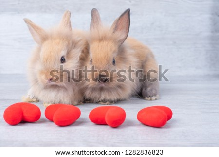 Couple small light brown rabbit on gray background in valentine's theme with mini heart