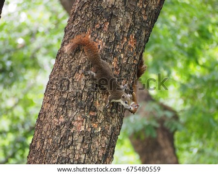 Couple squirrel are sweet kissing. #675480559