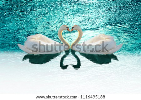 Couple Swans silhouette in heart shape floating on the lake with sunlight behind. Love bird concept. Photo manipulation.