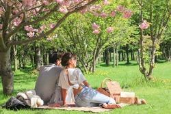 couple under the cherry blossom tree
