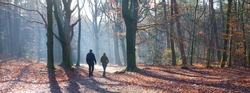 couple walks in autumn forest on sunny day in the fall near dutch city of utrecht