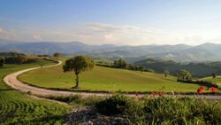 Coutry Road in San Severino, Le Marche, Italy