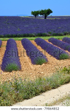 coutryside scenic in provence, france - stock photo