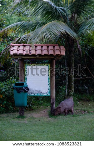 Covered sign in national park, with capybara grazing the grass, and rubish bin on the side. Sign is blank, ready for any text. Rio de Janeiro, Brazil. Foto stock ©