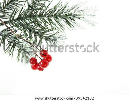Covered snow Christmas branch with red berries