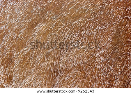 Horse Yiff http://www.shutterstock.com/pic-9262543/stock-photo-covered-with-frost-horse-fur-background-texture.html