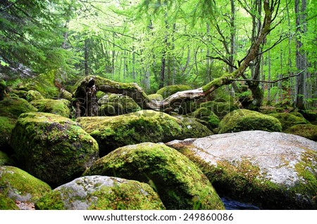 Covered with moss rocks and tree at fairytale-like magical forest.