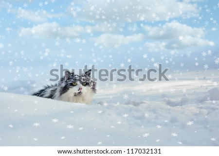Covered with snow cat