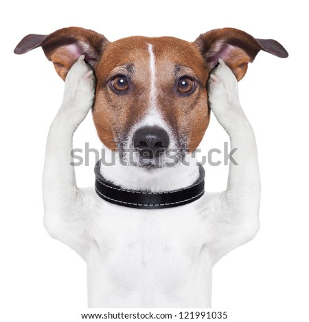 covering both ears dog with paws