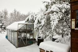 Covering the greenhouse and kitchen garden, deep snow after daylong snowfall on moorland smallholding in Nidderdale.