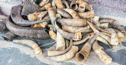 Cow and buffalo horns on the floor for sale. Selective focus.