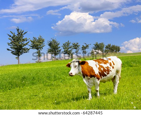 Cow and ecology landscape