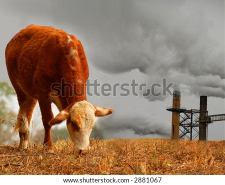 Cow and Smoke Stacks