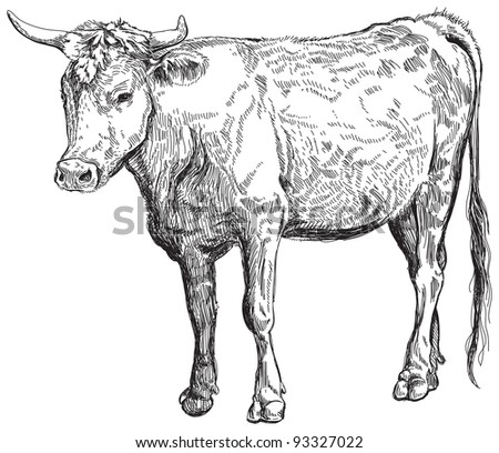 cow - black and white sketch. Bitmap copy my vector