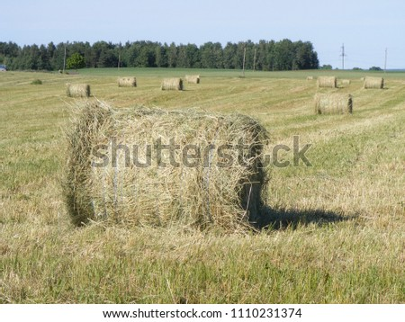 Cow food. Big hay bales on meadow field with agricultural land on the background. Rural household scene with mowed grass. Latvia nature landscape in summer. Countryside romanticism for tourists #1110231374