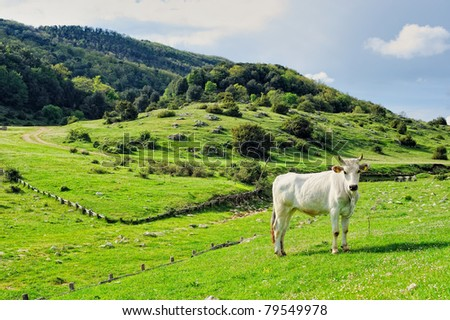 Cow grazing on a green pasture in the valley - stock photo