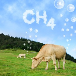 Cow grazing on pasture with CH4 text from clouds at the background. The concept of methane emissions from livestock.