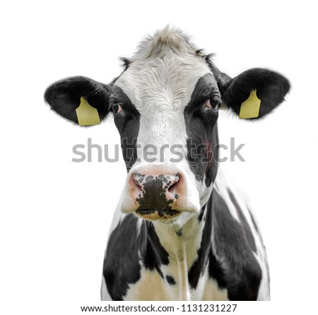 cow isolated on a white background #1131231227