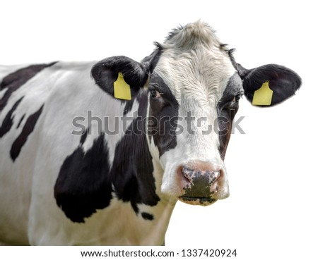 cow on a white background isolated #1337420924