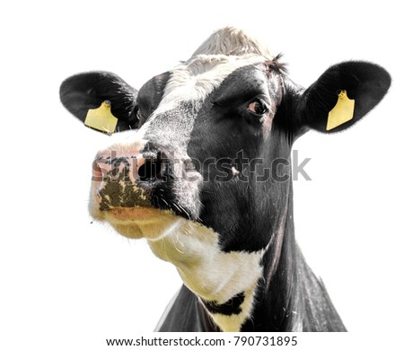 cow on a white background isolated #790731895