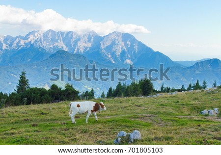 cow on alm #701805103