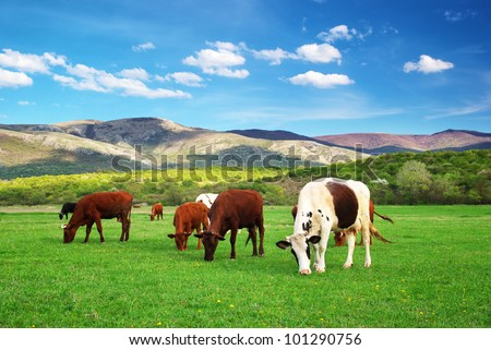Cow on green meadow. Nature composition. real
