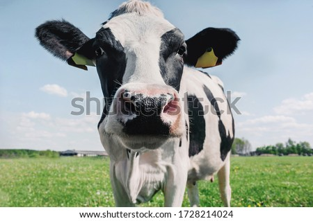 cow on the background of sky and green grass.
