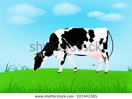 Cow over spring green meadow