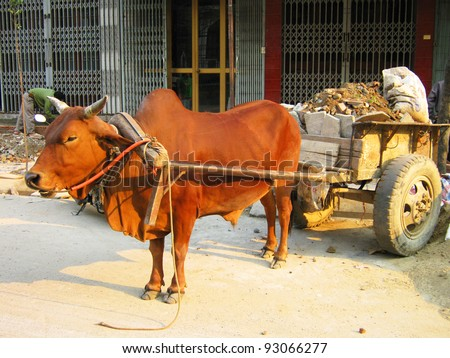 Cow pulling a cart in Vietnam.