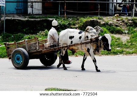 stock-photo-cow-pulling-wagon-on-pemba-island-zanzibar-archipelago-tanzania-772504.jpg