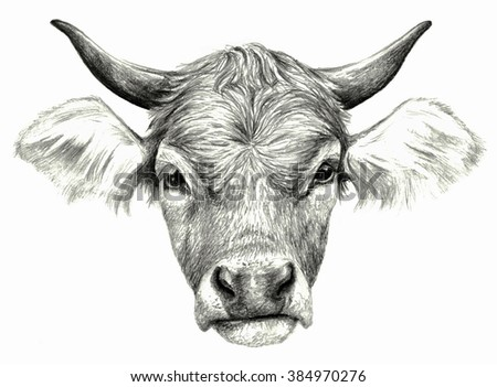 Cow`s head isolated on white background. Pencil drawing, monochrome image