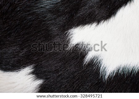 Cow Skin, Cow Hair, Fur. Black and White. Animal Background, Pattern, Wallpaper and Textured. Concept and Idea for Dairy Farm Life, Vintage Country Style.