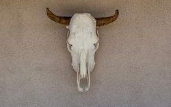 Cow skull with horns hanging on a stucco wall