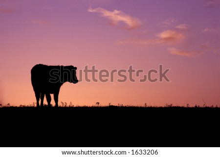 Cow Sunrise
