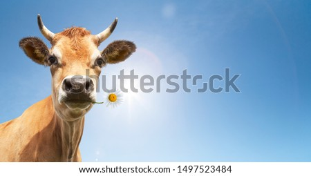 Cow with flower in the mouth #1497523484