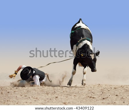 Cowboy Falling off a Fresian Bull isolated with clipping path