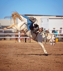 Cowboy falls off bucking horse in saddle bronc event at country rodeo