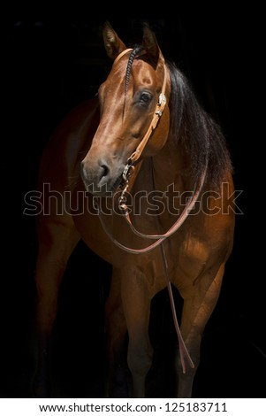 Cowboy Horse - stock photo
