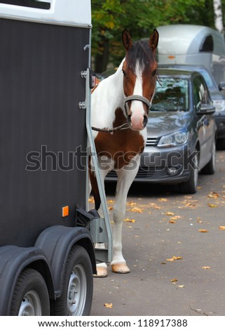 Cowboy trail horse waiting by a horsebox