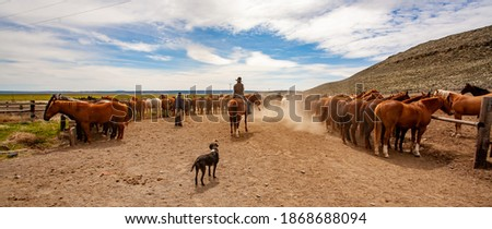 Photo of  cowboys from a cattle ranch near Silver Lake, sorting and selecting horses to be used for a roundup the following day.