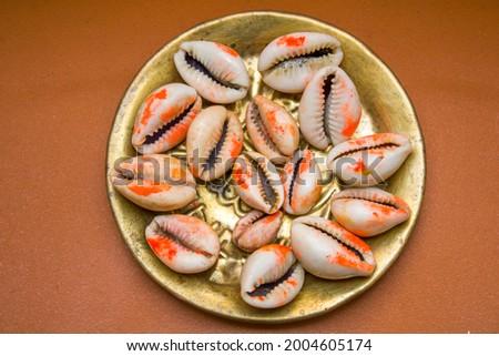 Cowrie Sea Shell ( Lakshmi Peeli, Kawri Kodi Peeli, Kaudi Shells ) Zdjęcia stock ©