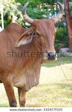 Cows are animals that have large hooves that are large pets.  #1424579105