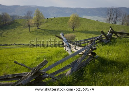 Cows graze in a hillside pasture in the Virginia mountains.