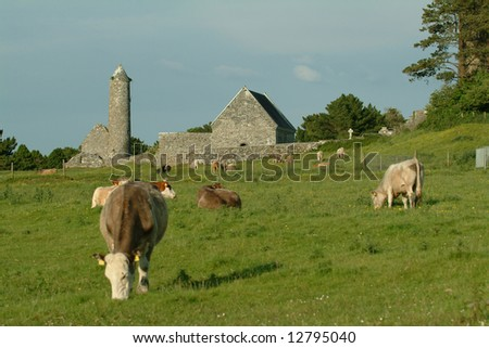 Cows grazing in front of Clonmacnoise Early Christian Monastic Settlement situated beside the river Shannon in Co. Offaly Ireland