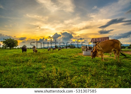 Cows grazing on a green field. #531307585