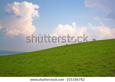 Cows grazing on a slope, under a cloudy sky