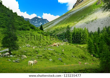Cows grazing on pasture in mountains at Sertig Dorfli, Davos, Switzerland - stock photo