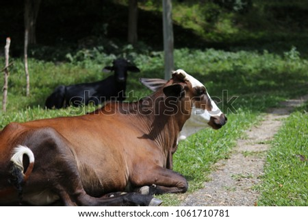 Cows in field #1061710781